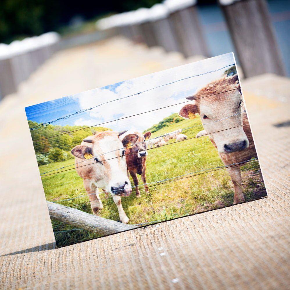 Een foto van koeien op Whitewash vurenhout
