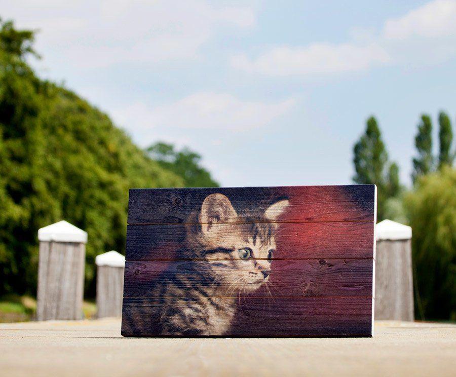 Een foto van een kitten op steigerhout