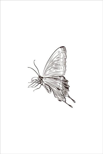 textielposter vlinder illustratie