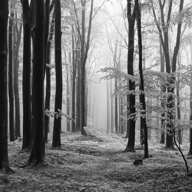 DP00102 | Forest Fog BW